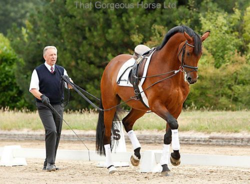 Picture of double lunge reins in use.