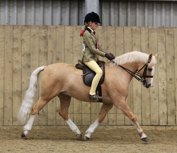 Picture of pony wearing show numnah