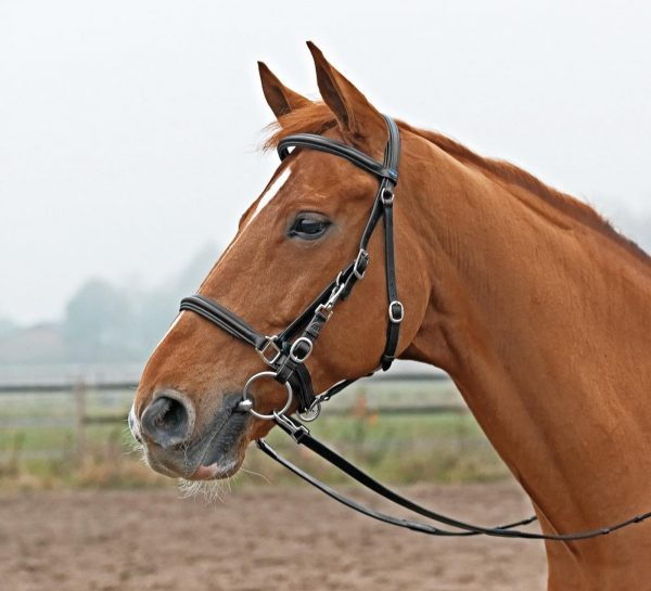 Picture of hacking bridle