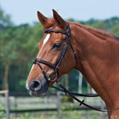 Picture of Brown Braid Bridle