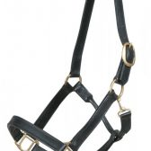 Picture of plain leather head collar