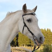 Picture of MH bridle in use