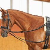 Picture of running reins