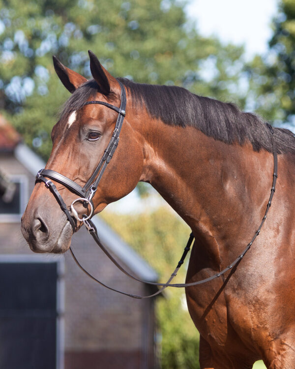 Picture of training bridle in use
